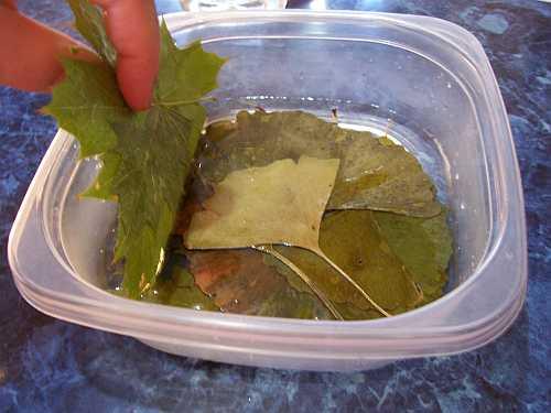 Layering leaves in glycerin