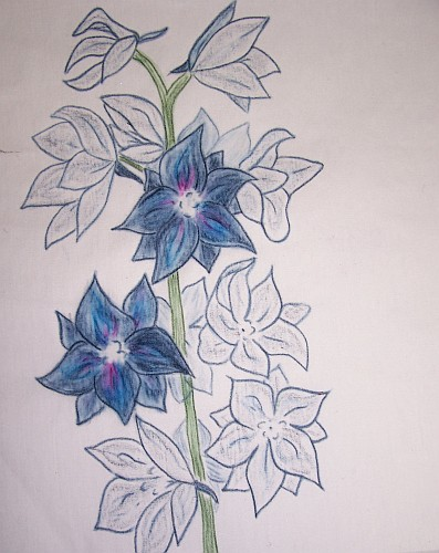 Two Flowers Colored