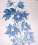 Delphiniums Colored