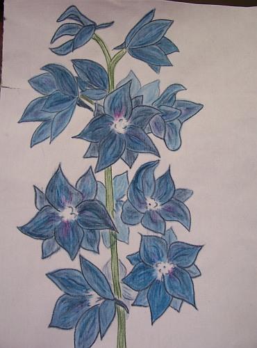 Delphinium Flower Dry