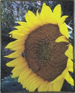 Week 3 Sept 18 Sunflower