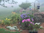 Front Door Garden in the Fog