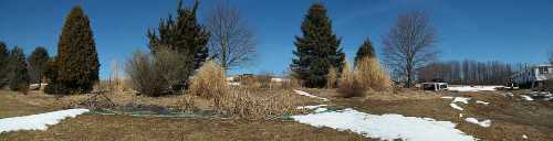 Maple Tree Garden Panoramic- The only way to get the whole garden in one photo