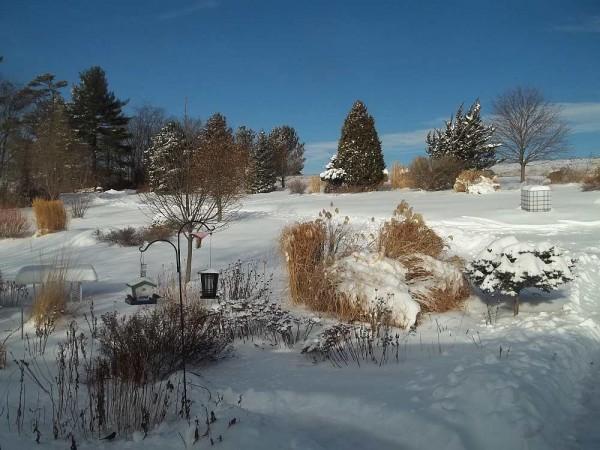 Pretty Snow 2-6-14