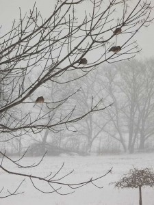Four Doves in the Ash Tree