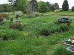 Front Yard 5-29-14