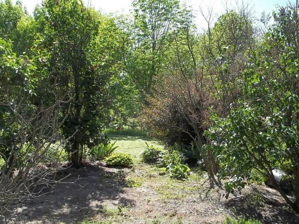 Lilac Garden Path