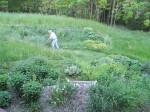 My Hero, Ken Weed Whacking Around Gardens