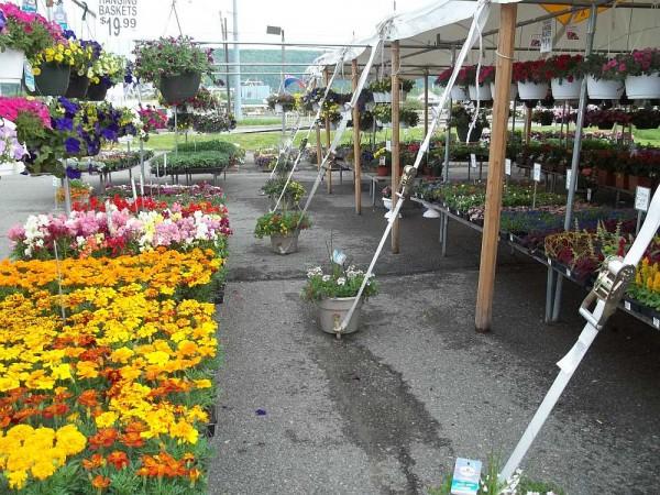 Flower Tent 2014