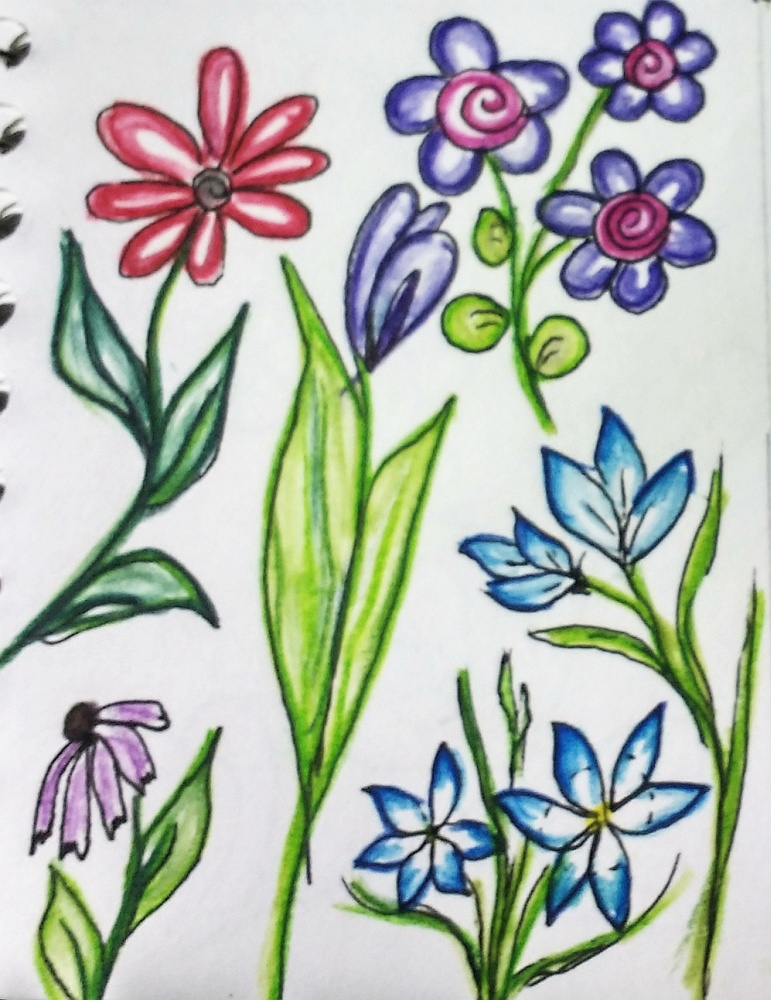 Flower sketches by Sue Andrus